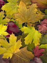 Autumn Gone