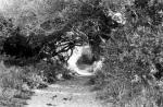 Big Sur Pathway