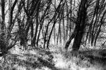 Forest-of-big-sur-2137