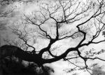 Tree Hawaii